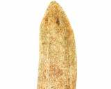 سنگک سبزیجات(کاغذی)